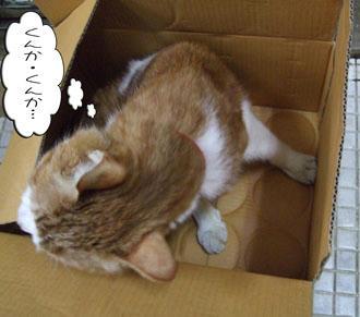 なんの匂いがするの~?(*´∇`*)