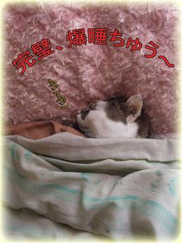 お布団の下もネコでありますように…人(´д`;)