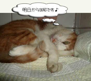 Σ(゚□゚ノ)ノエー!Σ(*゚◇゚*)ウッソー!Σヾ(*゚○゚)ノホントー!?