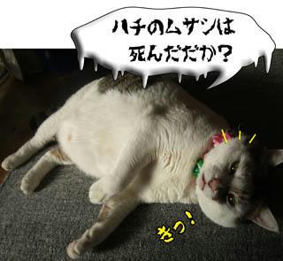 ミツバチは刺すと死ぬんだよ。榎本三恵子さんが言ったっしょ!