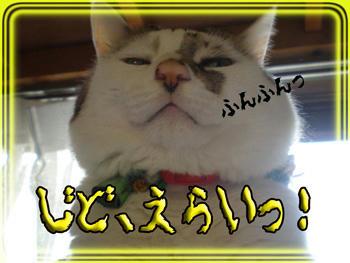 その「上から目線」は止めなさい!モデル猫ちゃんは「カメラ目線」!!