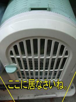 暑くてもガマンしなさいね。