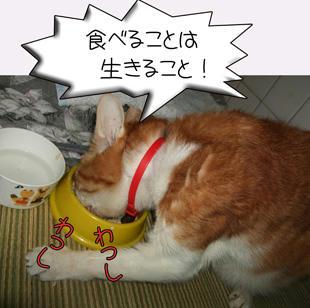 (*゚∀゚)*。_。)*゚∀゚)*。_。)ウンウン、いっぱい食べるんだよ…