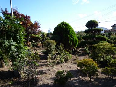 庭は季節がら、ちょっと閑散としていました。
