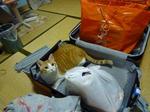 妹のスーツケースに入るちゅん子。