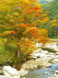 太田川を上流へ