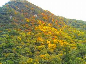 秋ですネェ