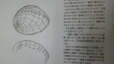 Image764.jpg