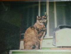 070208愛猫「クマ」
