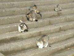 070218多摩川の猫達
