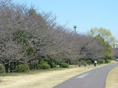 070318多摩川の桜並木
