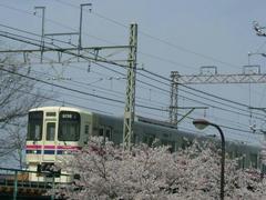 桜の中を快走する京王9000系