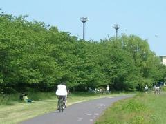 緑濃き多摩川の風景