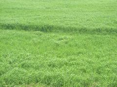 多摩川の緑風景
