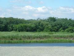 多摩川の夏☆雰囲気