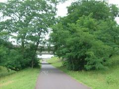 多摩川の緑生茂る木々