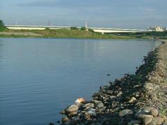 多摩川の水辺