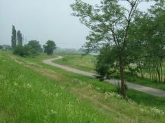 多摩川の細い道