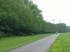 夏の桜並木