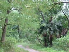 多摩川の岸辺の木々