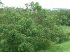 多摩川の河川敷の森