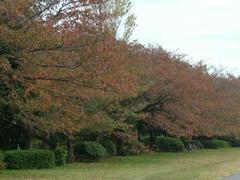 紅葉が美しい多摩川界隈