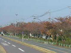 多摩川の住宅街の紅葉