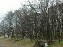 多摩川の木々!