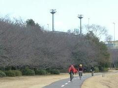 多摩川の冬の桜並木