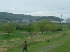 河川敷の緑!