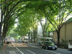阿佐ヶ谷駅前の楠
