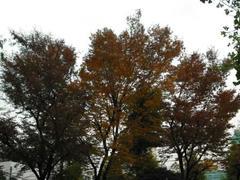 浅草の紅葉