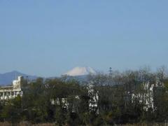 多摩川の富士山2