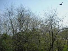 多摩川の新緑
