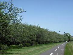 多摩川・緑の季節