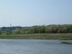 初夏の多摩川