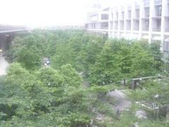 品川・港南口の木々