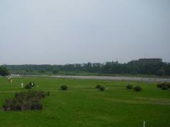 多摩川の緑のじゅうたん