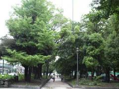 錦糸公園の緑