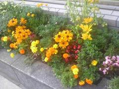 ビルの隅に咲く花