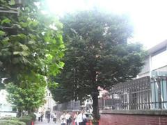 青山学院の木々