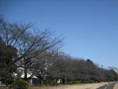 多摩川☆冬景色