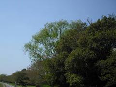 多摩川・新緑の季節