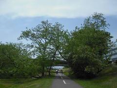 多摩川・風の道