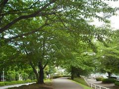 多摩川の木々