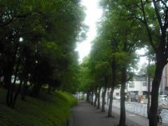 南砂町の木々