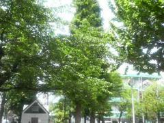 浅草公園の緑