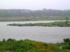 大雨の多摩川