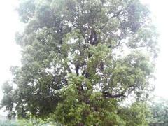 新木場の緑