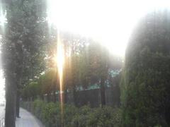 府中の風景